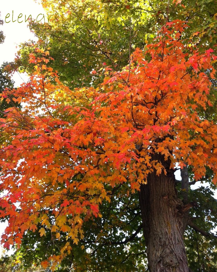 img_4986_autumn_tree_elengrey_september_2013-1024x1280