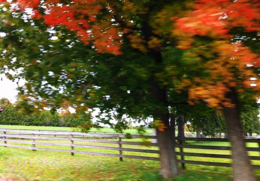 IMG_8174_autumn_blur_2_elengrey_september_2014